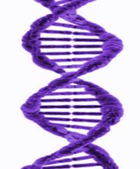 zahnverfärbung, dna, gen, keime, intrinsich, von innen, Genetik