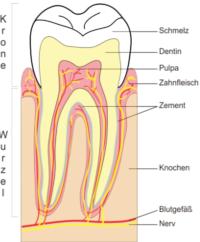 zahnverfärbung, zahn, dentin, zahnschmelz